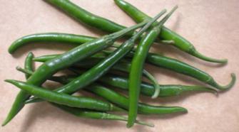 Especialistas del Inifap desarrollan chile serrano con mayor resistencia a enfermedades
