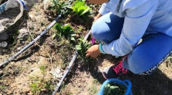 Mujeres cultivan hortalizas en penal de Oaxaca