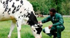 Alemania debe mejorar en etiquetado de bienestar animal