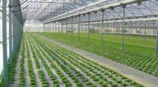 Querétaro solicita a la federación 10.5 mdp para invernaderos