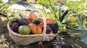 Buenas razones para comprar alimentos ecológicos