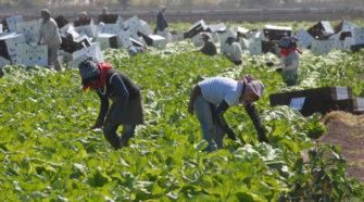 Canadá ofrece empleo a migrantes mexicanos