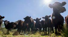 Emite la Secretaría de Hacienda reglas de operación para aseguramiento agropecuario