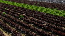 Francia apuesta por una agricultura con menos fitosanitarios