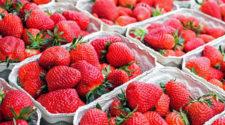 Fresa, espinaca y kale, entre los alimentos con más residuos de pesticidas