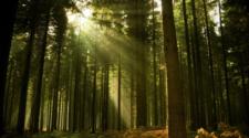 Gobierno de la CDMX invertirá 1000 mdp en suelo de conservación