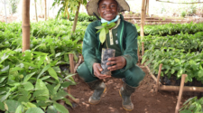 Jóvenes nigerianos crean ONG de producción orgánica