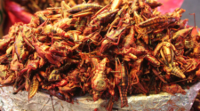Las proteínas del futuro: insectos, leguminosas y algas