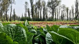 Municipio de Q Roo apuesta por agricultura orgánica
