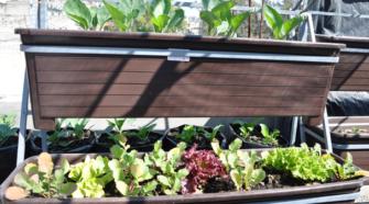 Productores de Tamaulipas reciben capacitación en huertos orgánicos