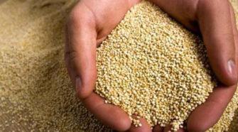 Bolivia es líder en producción de quinua orgánica