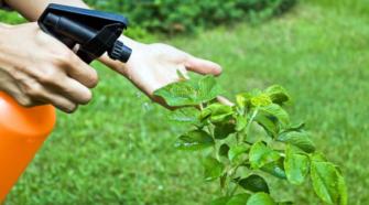 Con bioinsecticidas buscan mejorar la calidad de vida
