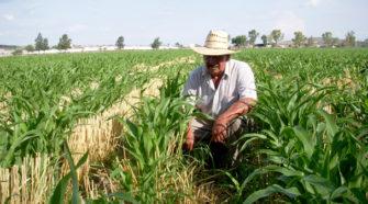 Destaca la FAO valor de la sanidad vegetal para proteger la vida