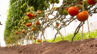 Productores de Sinaloa apuestan por producción orgánica