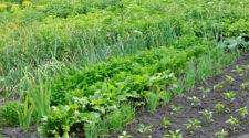 Vietnam inaugura la mayor planta de biofertilizantes en el país