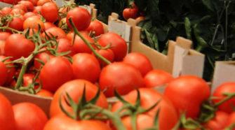 EU cobrará impuesto compensatorio al tomate mexicano