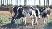 Productores de leche piden precisión en esquemas de apoyo