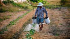 FAO ayuda a agricultores en crisis humanitarias