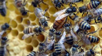 Legisladora propone prohibir uso de pesticidas en la CDMX