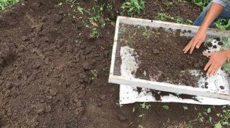 Siembra exitosa de huertos orgánicos en Nuevo Laredo
