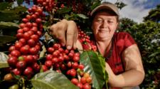 Cafetaleros reciben apoyo de la Sader