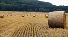 Investigadores y autoridades urgen a evitar quemas agrícolas