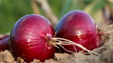 Precio de la cebolla aumenta 200% en el último año