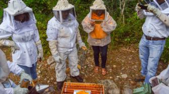 Inifap desarrolla suplementos para nutrir abejas