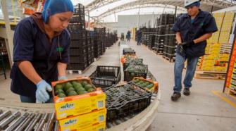 México abrirá 38 nuevos mercados de exportación hortofrutícola