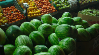 ONG piden decreto presidencial para prohibir el cultivo de transgénicos