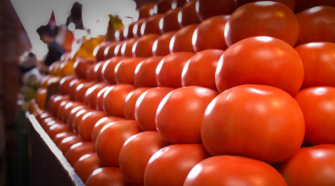 Autoridades analizan cambiar cultivos de tomate por arancel