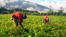 Autoridades iniciarán entrega de apoyos a productores en próximos días