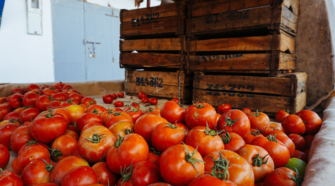 Autoridades preparan estrategia a favor de exportadores de tomate