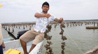 Impulso a la ostricultura en México