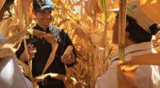 Reconocen a Bram Govaerts por innovación en sistemas agroalimentarios