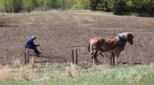 Informe urge a los gobiernos reformar sus apoyos a la agricultura