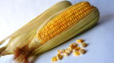Legisladores piden declarar al maíz patrimonio nacional alimentario