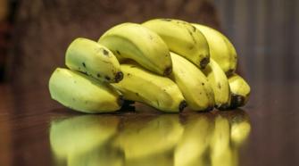 Productores de plátano y autoridades unen acciones contra plaga colombiana