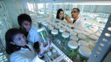 Científicos exigen debate sobre uso de transgénicos