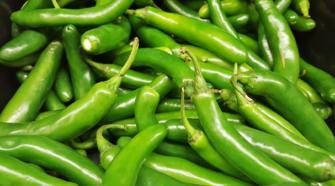 Desarrollan híbrido de chile serrano que reduce tiempo de cosecha