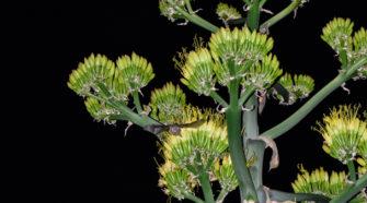 Descubren presencia de murciélago polinizador en Sierra de Guadalupe