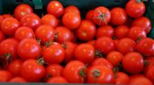 EUA pretende incrementar arancel al tomate de 17.5% a 25.28%