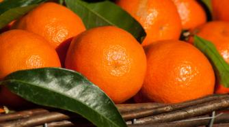 Entregan recursos para proteger cultivo de mandarina en Veracruz