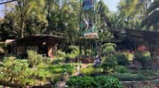Huerto Roma Verde, una opción sustentable de alimentación