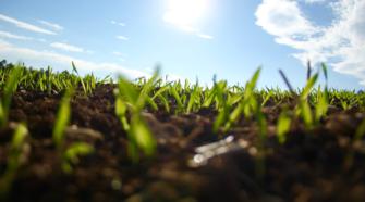 Implementan fertilización mediante las hojas de las plantas