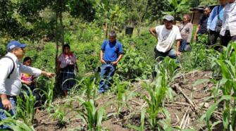 Productores buscan recuperar suelos de Chenalhó, Chiapas