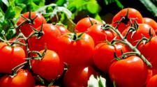 Firman nuevo acuerdo sobre tomate mexicano