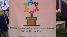 Plántulas de Tetela del Monte, colectivo impulsor de plantas de ornato