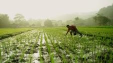 Recibirán sector rural y agroalimentario menos recursos en 2020