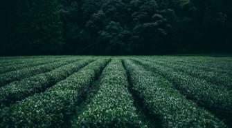 En riesgo 20 mil hectáreas de cultivos en BCS por apagones